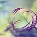 © Betty Butler-Purple Shell