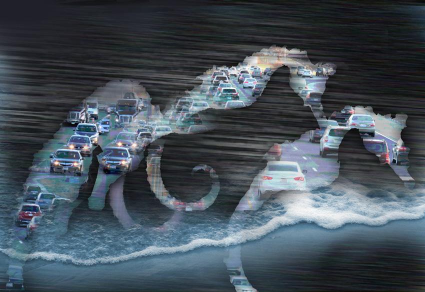 sea horse prints